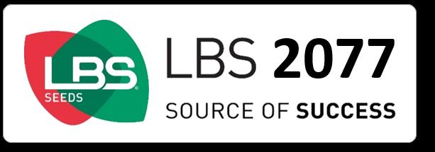 Maïs LBS 2077