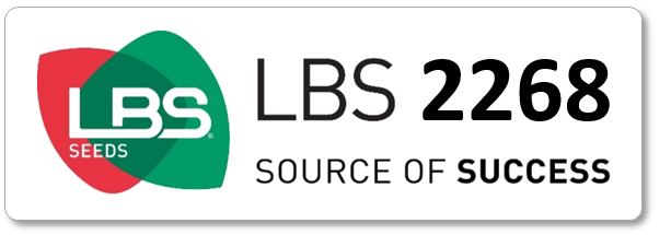 Maïs LBS 2268