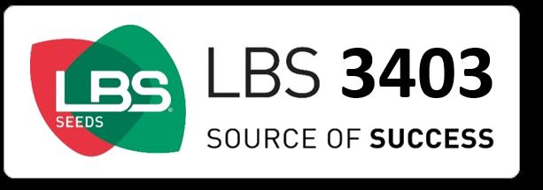 Maïs LBS 3403