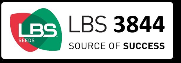 Maïs LBS 3844