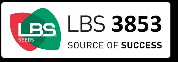 Maïs LBS 3853