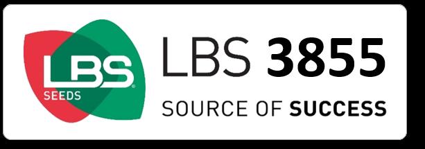 Maïs LBS 3855