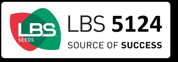 Maïs LBS 5124