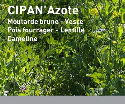 Mélange interculture LBS CIPAN'Azote