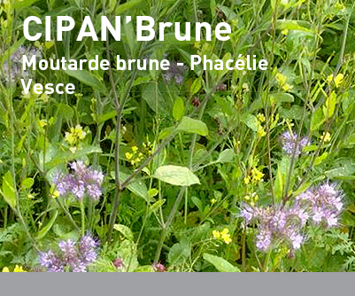 Mélange interculture LBS CIPAN'Brune