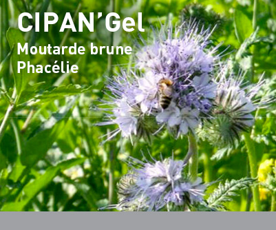 Mélange interculture LBS CIPAN'Gel
