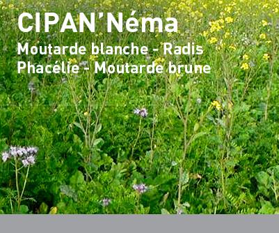 Mélange interculture LBS CIPAN'Néma