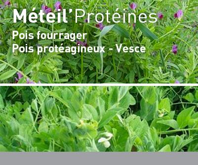 Céréales immatures LBS METEIL'Protéines