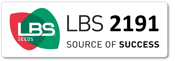 Maïs LBS 2191