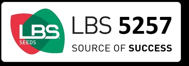 Maïs LBS 5257