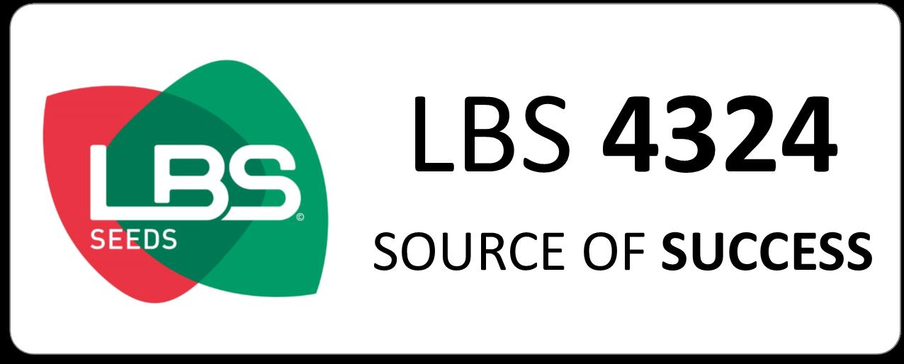 Maïs LBS 4324