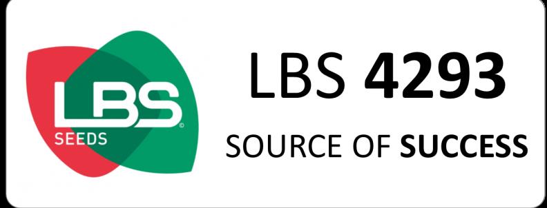 Maïs LBS 4293