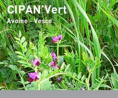 Mélange interculture LBS CIPAN'Vert