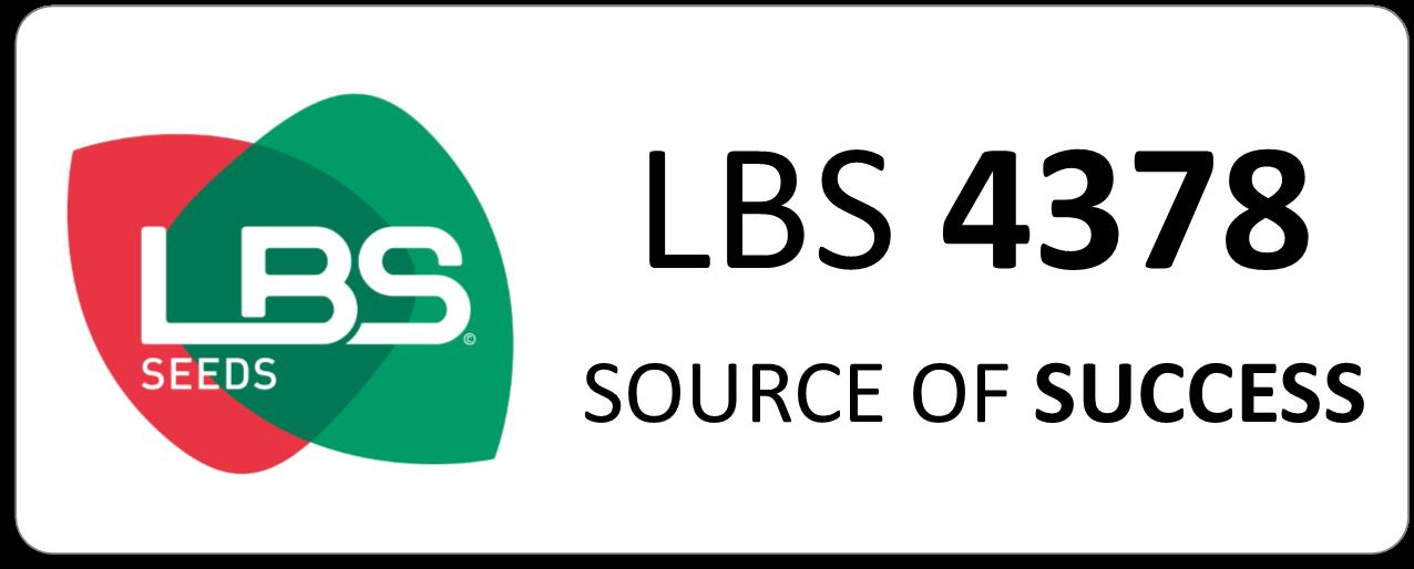 Maïs LBS 4378